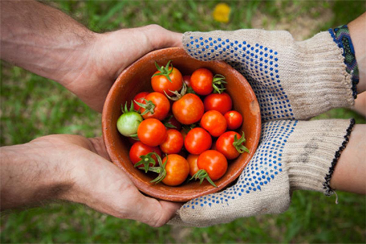 Portail consacré à l'agriculture biologique.