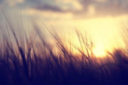 Des mesures pour l'industrie bioalimentaire.